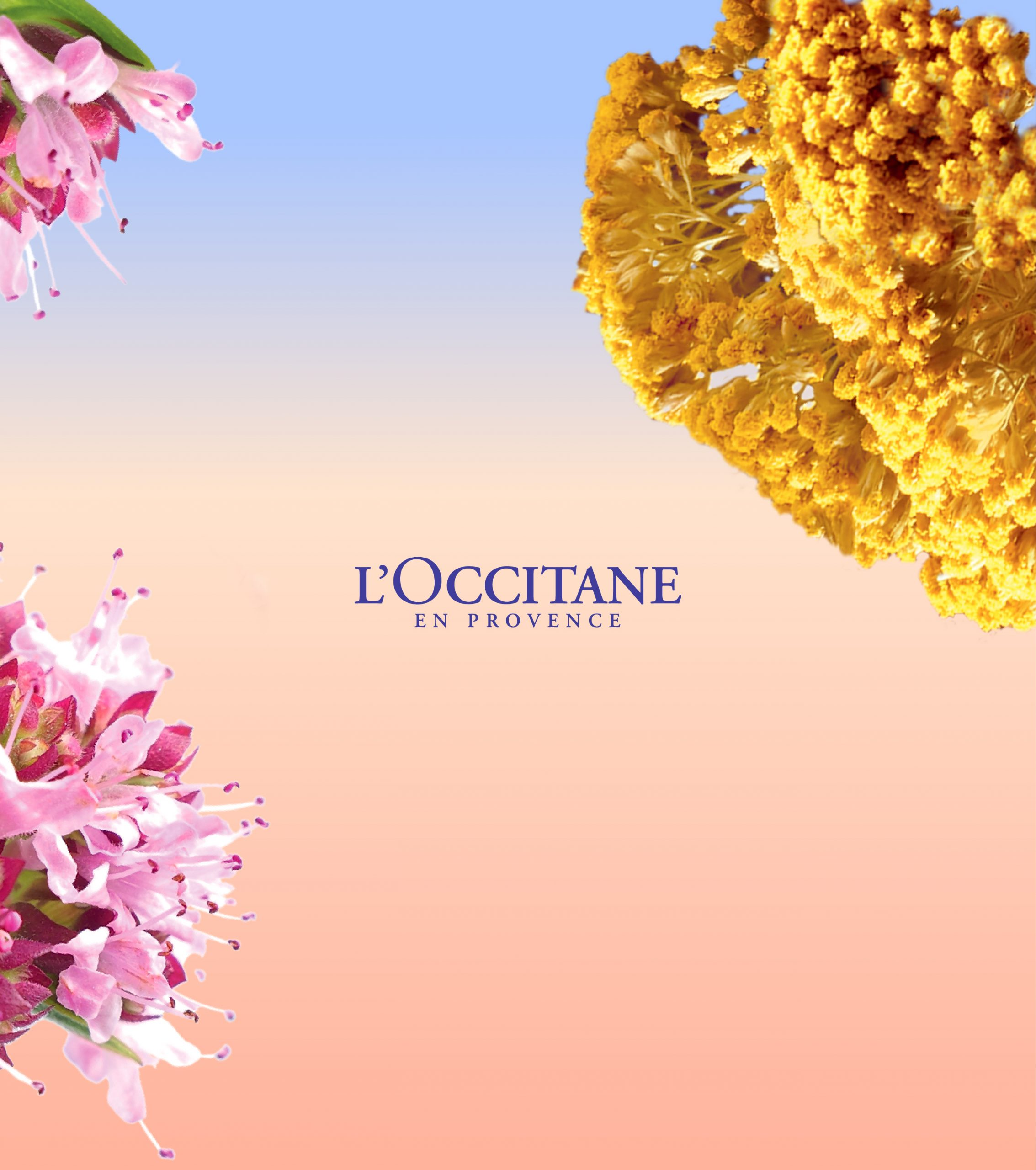 direction artistique ingredients Reset l'occitane